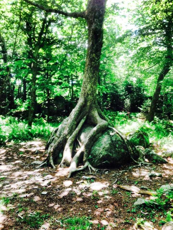 Of Rocks, Trees and a Beloved Savior